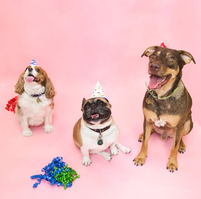 all-dogs-go-to-birthday_1512x.jpg